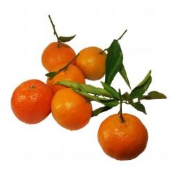 mandarines amb fulla