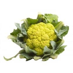 chou-fleur vert des vergers catalans