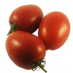 1 KG. Tomate de Vilabertran mûrs pour sauce.